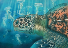 Green back turtle swimming with jellyfish.jpg
