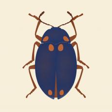 Blue bug .png