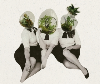 Three women with plants in their heads