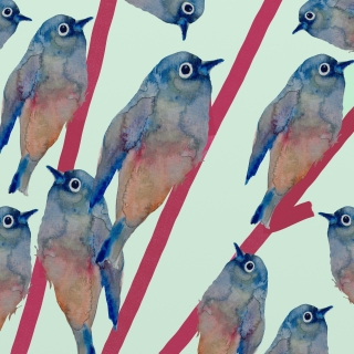 Uccellini birds