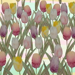 Tulipani multi.jpg