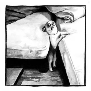 Small dog stuck in the sofa.jpg