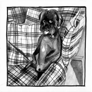 Suspicious looking dog sat upright on a sofa.jpg