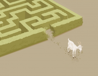 Do you use logic or instinct- A goat going out from a maze using the instinct.jpg