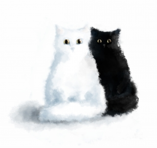 black cat and white cat