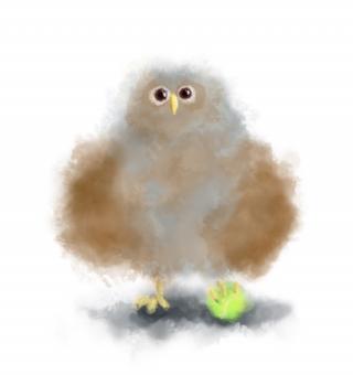 Owl's baby plays tennis ball.jpg