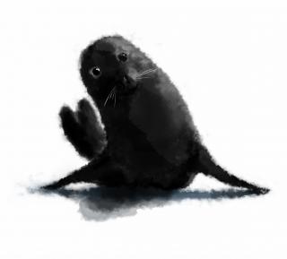 Fluffy seal.jpg