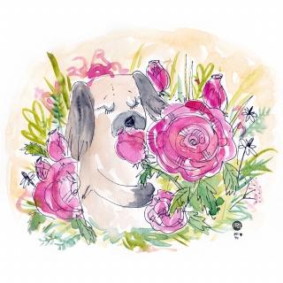 Dog smelling roses.jpg