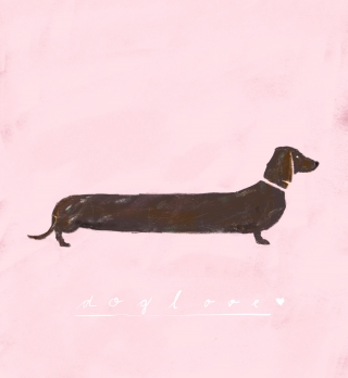 Dachshund, wiener dog