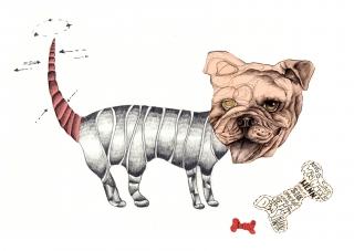 surreal bulldog.jpg