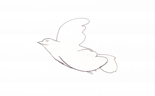 Simple and neat flying bird / dove