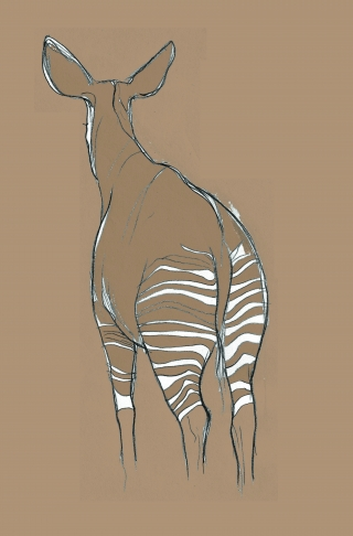 Okapi from behind