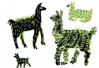 The llamas.