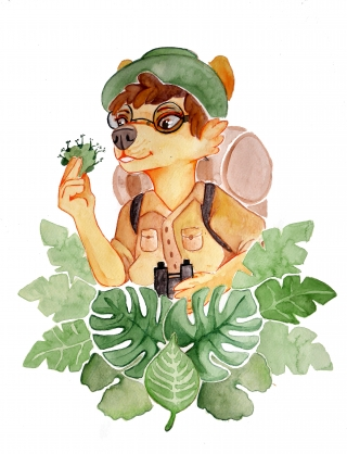 Jungle explorer.jpg