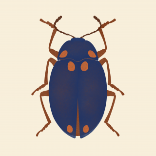 Blue bug .png