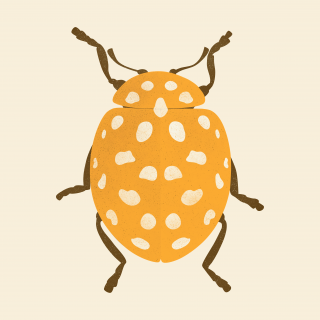 Yellow bug with white dots.png