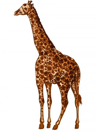 Giraffe on a white background.jpg