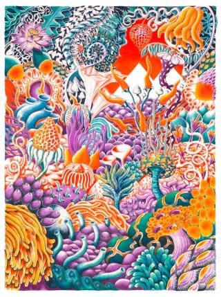 Coral Chilli