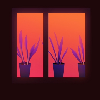 Window with plants in the evening street.jpg