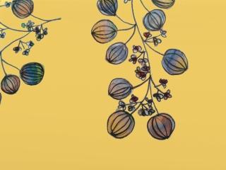 Inspired by Chinese lantern plant.jpg