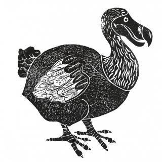 dodoblack