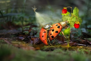 Ladybugs reproducing near forest strawberries.jpg