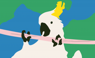Cockatoo bird chewing on broadband Internet wire.png