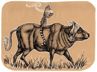 A Genet riding a Waterbuffalo while having a cup of tea. .jpg
