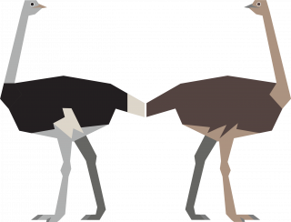 Male and female ostrich.png
