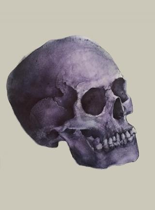 Skulldrawing