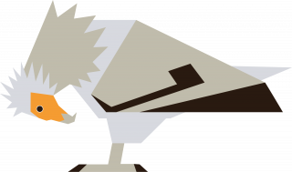 Egyptian vulture.png