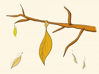 Autumn .jpg