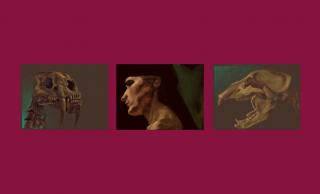 seriesdada_skulls_dehem