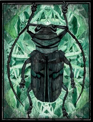 Coleoptera 02