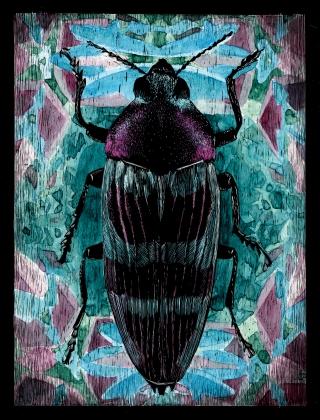 Coleoptera 03.jpg