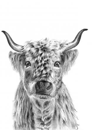 Highland Cow .jpg