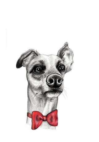 Doggy Red Bow Tie