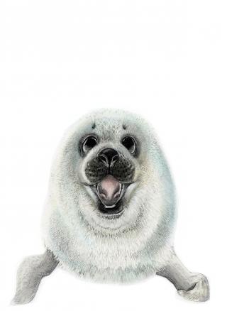 Seal colour.jpg
