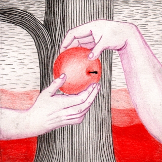 An apple is given from one hand to another.jpg
