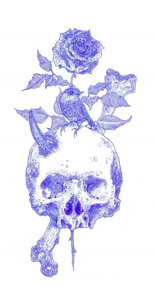 Skull and bird