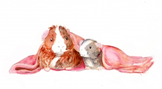 Guinea pig and hamster under the blanket .jpg