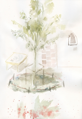 the tree from the garden .jpg