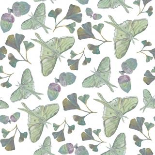 rapport_butterfly.jpg