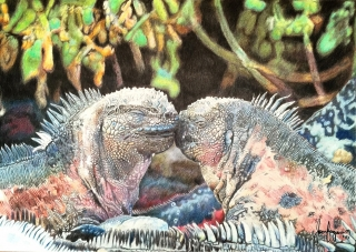 Two Galapagos Iguanas together