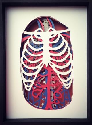 linda toigo_pulp sections_respiratory
