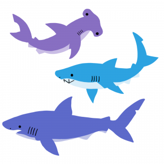 Sharks .png