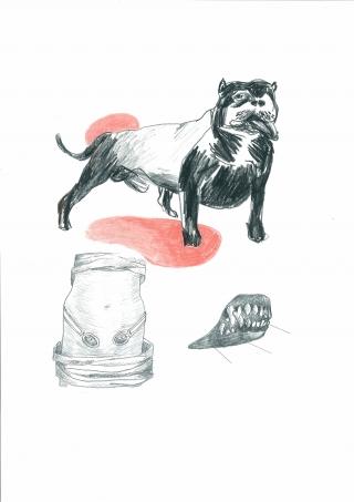 Tiere 1 Kampfhund.jpg
