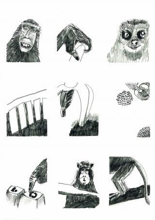 Tiere 16 Affen.jpg