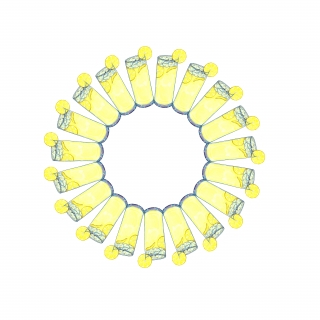 Circle of lemonade in a tall glass with a white background..jpg