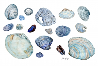 A collection of blue seashells..jpg